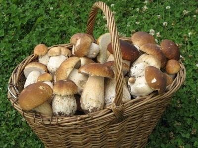 Які гриби збирати і чого остерігатися в лісі. Блог Марини Кавкало