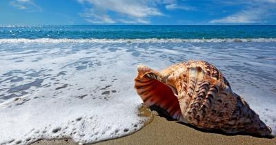 Чому в мушлях ми чуємо звук моря: нове дослідження вчених