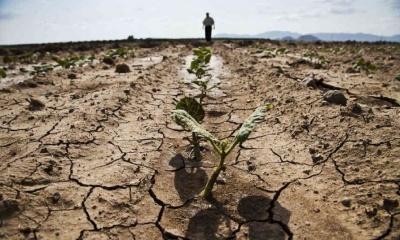 У Польщі через посуху постраждали понад 90 тис. фермерських господарств