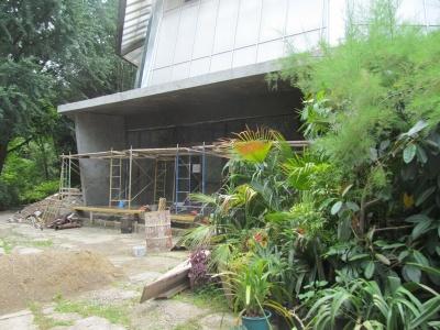 У ботанічному саду ЧНУ гинуть рослини через ремонт