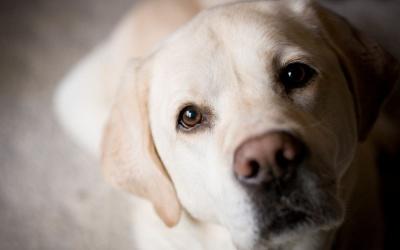 Поліція взялася за справу собаки, з якого заживо знімали шкуру