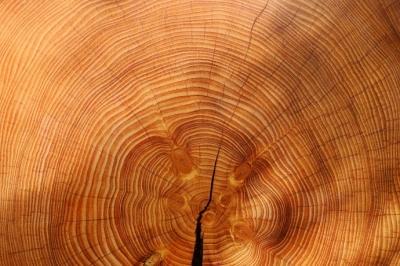 Порошенко запропонував зміни до закону про деревину