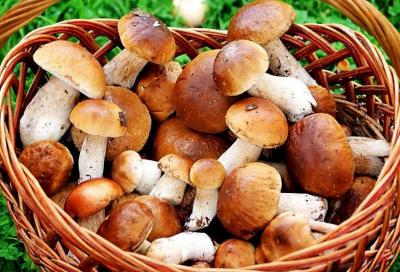 Супрун дала «рецепт» безпечних грибів