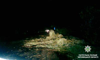 Негода на Буковині: гроза повалила дерева та обірвала електролінії