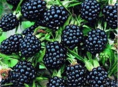 ТОП-3 корисних продукти, які потрібно їсти в серпні