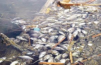 Аномальна спека призвела до масової загибелі риб в Німеччині