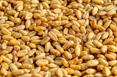 Україна експортувала майже 3 млн тонн зернових