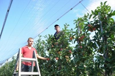 Будуть і яблука, і картопля: фермери з Буковини прогнозують щедрий урожай