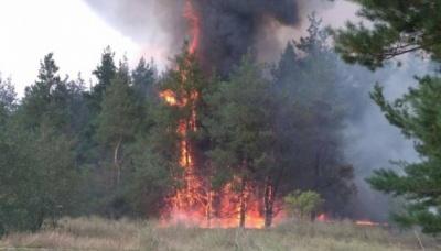 На Миколаївщині горять три гектари лісу