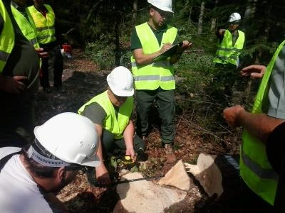 Звалювання дерев та обрізання сучків: на Буковині відбулися обласні змагання вальників лісу