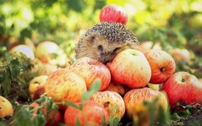 5 оригінальних рецептів страв з яблуками на Спаса
