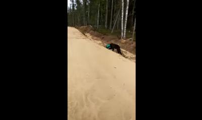 У Росії шукають ведмедя з каністрою на голові - відео