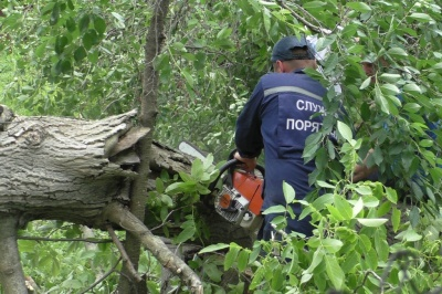 У Садгорі знесуть дерева, які руйнують історичні будівлі