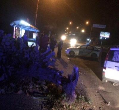 У Чернівцях п'яний водій буса зніс дерево і вижив - фото