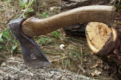 На Буковині судитимуть двох чоловіків, які займалися незаконною вирубкою лісу