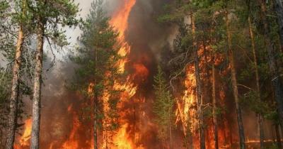 На Харківщині – масштабна пожежа: горять 10 гектарів лісу