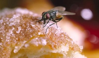 Чи можна їсти продукти, якщо на них сіла муха: пояснення Супрун