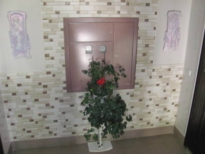 Клумби з їжачками та розкішні вазони: як виглядає найкращий під'їзд Чернівців - фото