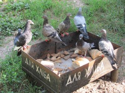 Пеньки з вазонами і годівнички для птахів: як виглядає найкраща прибудинкова територія Чернівців