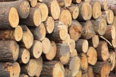 Рада знову дозволила експорт лісу-кругляка