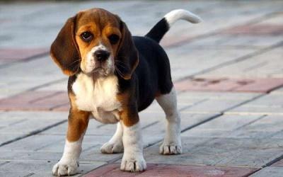 У Чернівцях вперше пройде марш за права тварин