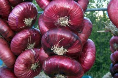 Чим корисна для здоров'я червона цибуля