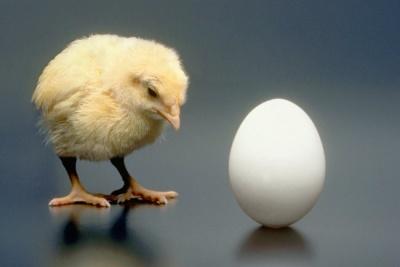 Вчені вирішили головну загадку тисячоліття про курку і яйце
