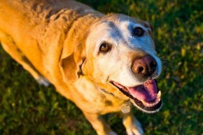 Хитрий пес через заздрість вдавав хворого: веселе відео