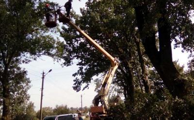 У Чернівцях зріжуть понад 200 дерев за якісним станом