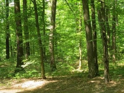 На Буковині люди у лісі знайшли міну Другої світової війни