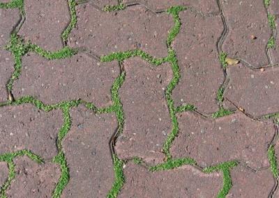 Як позбутися трави між тротуарними плитками і камінцями: легкий спосіб