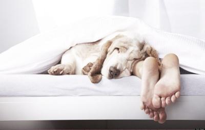Вчені розрахували оптимальний час для здорового сну