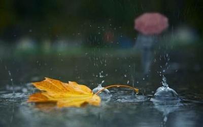На Буковині похолодає і очікуються дощі