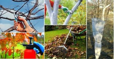 Як підготувати плодові дерева до холодів: поради