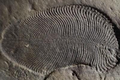 Знайдена найдавніша істота на Землі