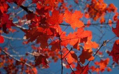 Синоптики: Початок жовтня здивує українців