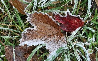 Готуємося до заморозків та мокрого снігу: на Буковині прогнозують подальше зниження температури