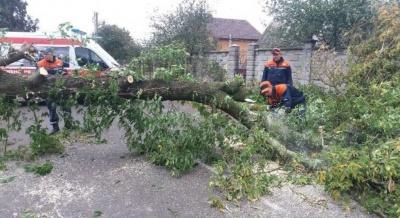 Під час негоди на Львівщині гілкою дерева вбило чоловіка