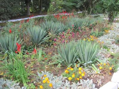Приходимо наче в музей природи: у шкільному дендропарку росте понад 100 видів дерев і квітів