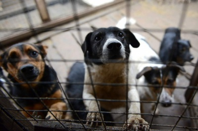 Чернівецька міськрада підтримала петиції щодо безпритульних собак
