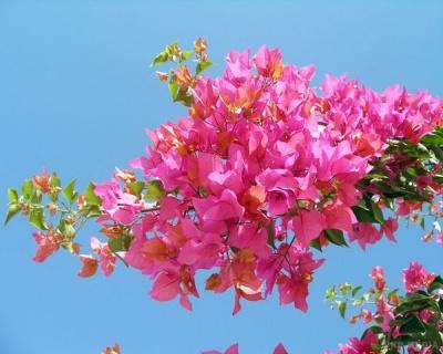 Які рослини «заманюють» гроші у дім: перелік