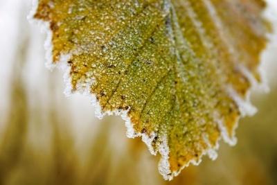 Українців попередили про перші заморозки