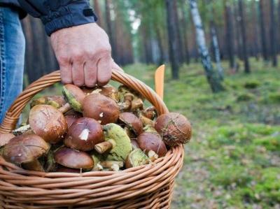 На Буковині рятувальники 5 годин шукали двох грибників, які заблукали в лісі