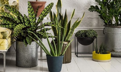 Шість рослин, які чудово очистять повітря у вашому будинку