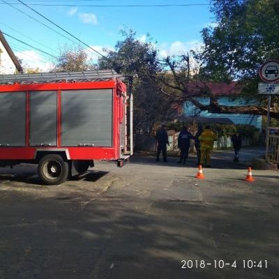 У Чернівцях через повалене дерево тимчасово перекрили вулицю Тисменицьку