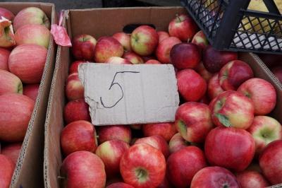 Бояться втратити урожай: садоводи пояснили, чому на Буковині низька ціна на яблука