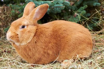 12-кілограмовий кролик: на Буковині відбувся аграрний ярмарок