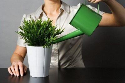 Поради від флориста: як і чим підживлювати кімнатні рослини для гарного росту