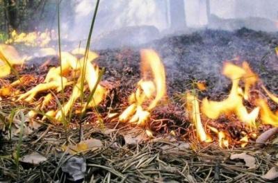 Синоптики попередили про надзвичайну пожежну небезпеку на Буковині