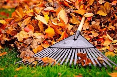 Спалення листя і сміття: у Чернівцях інспекція благоустрою склала 16 протоколів